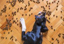 Odżywianie psa